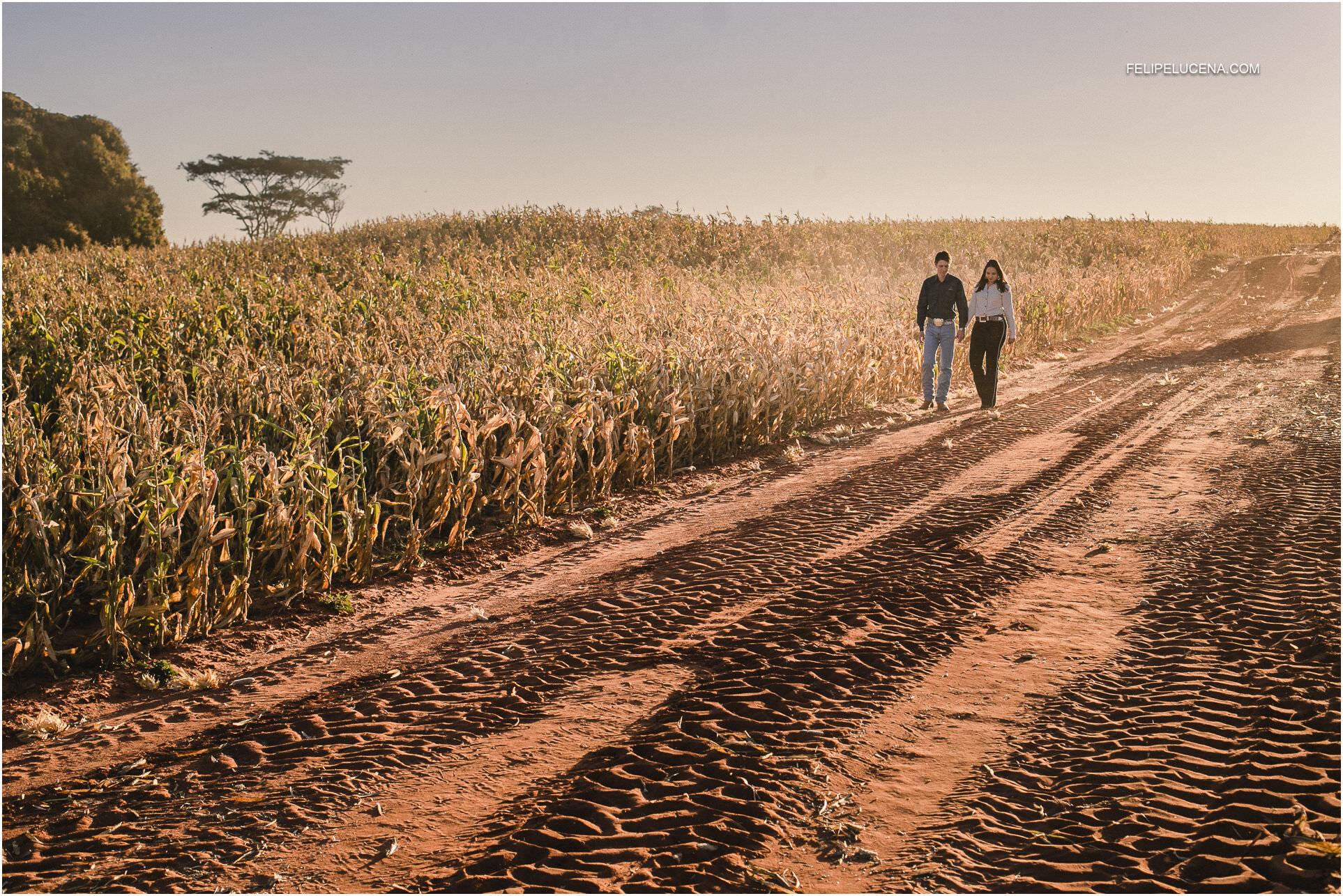 plantacao de milho